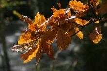 Павлово осень